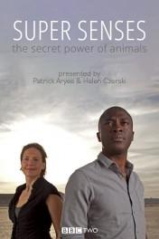Super Senses: The Secret Power of Animals